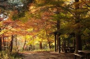 昨年「山撮り写真教室」穂高湖付近にて 撮影:講師 岡本カメラマン