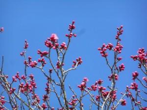 3/11撮影 日々鮮やかに咲き始めています!