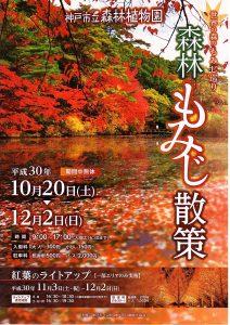 森林もみじ散策・紅葉のライトアップ @ 神戸市立森林植物園