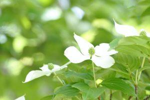 【摩耶の森クラブ】初夏の植物観察会 @ 摩耶山掬星台集合