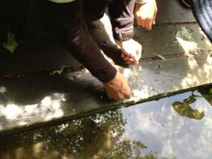 いざ救助作戦。くぼみの水たまりで過ごすオタマも