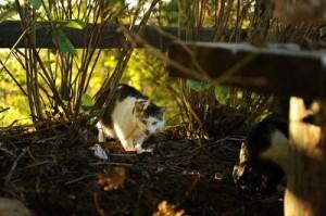 [マヤ猫]10月の山撮り写真教室にて岡本先生撮影。