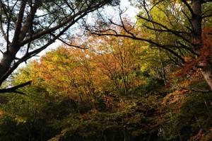 10月の山撮り写真教室にて岡本先生撮影。