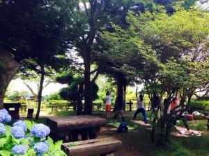 木陰で ゆっくり  -シヴァナンダヨガをベースにしたやさしいヨガ-