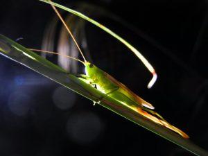 鳴く虫を聞く夕べ @ 神戸市立森林植物園