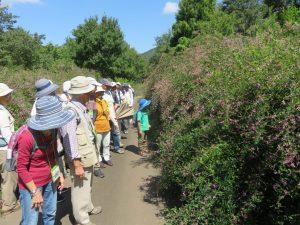 自然観察講座 第6回「秋草と萩めぐり」~虫の音に誘われて花めぐり~ @ 神戸市立森林植物園