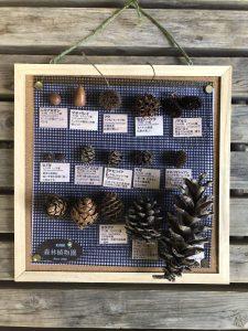 木の実の標本作りと子供のための森林ガイドツアー @ 神戸市立森林植物園