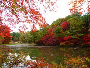 森林もみじ散策(神戸市立森林植物園) @ 神戸市立森林植物園