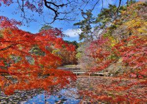 森林もみじ散策(森林植物園) @ 神戸市立森林植物園