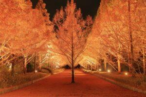 紅葉のライトアップ(神戸市立森林植物園) @ 神戸市立森林植物園