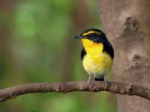 【摩耶の森クラブ】秋の野鳥観察会 @ 摩耶山掬星台周辺