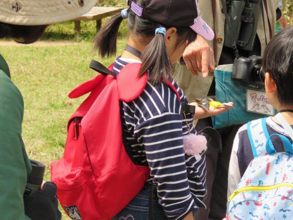 おやこでバードウォッチング @ 神戸市立森林植物園