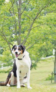 牧場犬「ルーシー」バースデーイベント @ 六甲山牧場