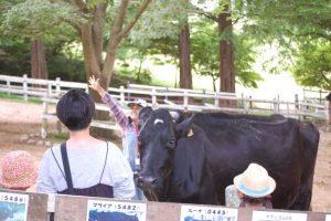 酪農教室 @ 六甲山牧場 北イベント広場