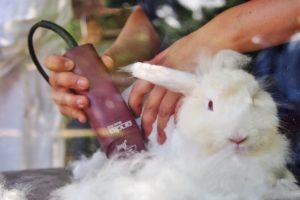 納涼!ひつじ以外の毛刈りショー @ 六甲山牧場 南イベント広場