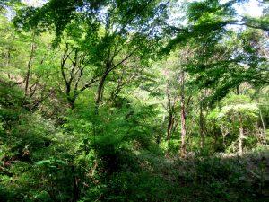 「森と会話する 〜森とハモろう〜 」 @ オテル・ド・摩耶、摩耶自然観察園